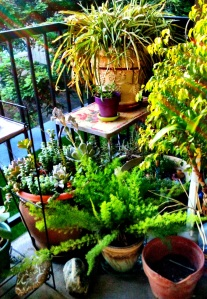 One corner of the patio